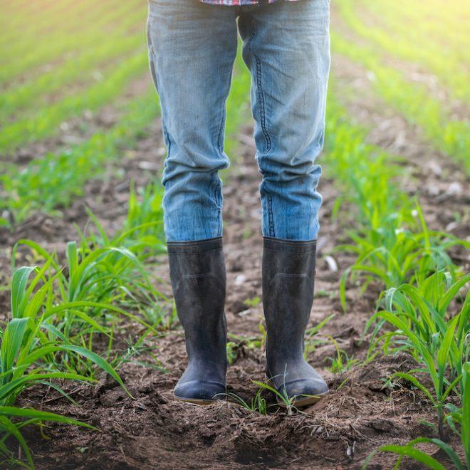 Agricultrice dans le champ de maïs