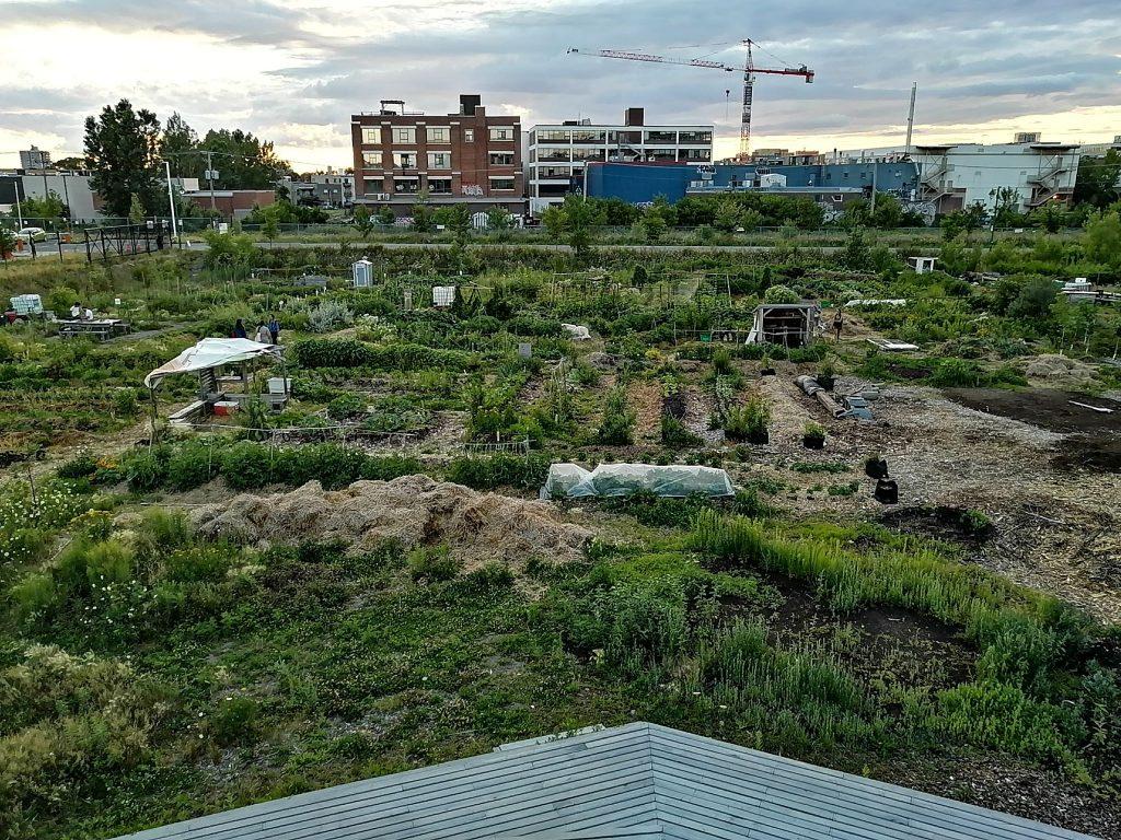 Jardin communautaire dans Parc-Extension
