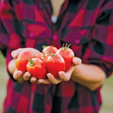 prenez le champ tomates julie aube