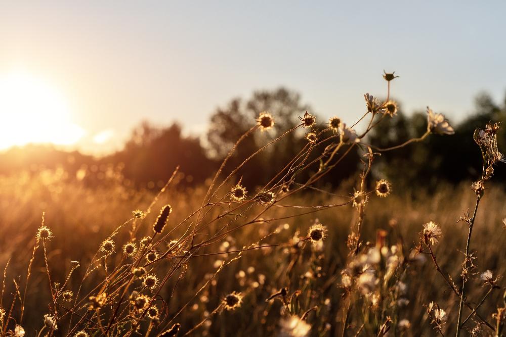 nature et paix des champs retour terre